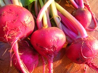 Fresh Ruby Red Beets from a Tucson Garden