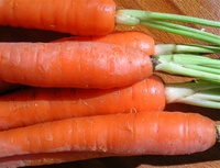 Danvers Half long carrots