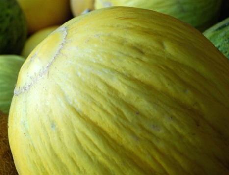 how to cut a casaba melon