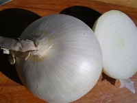 White Sweet Spanish Onion