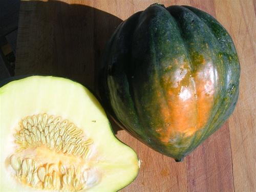 Acorn squash seeds for Table queen squash