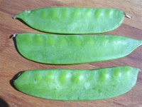 Oregon Sugar Pod Snow Peas